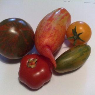 Mittlere Tomaten mit Pelati