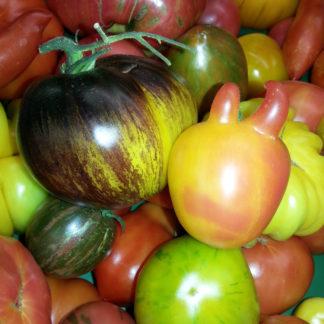 Favoriten Tomaten